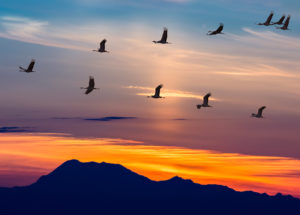 Want to learn leadership skills from birds?
